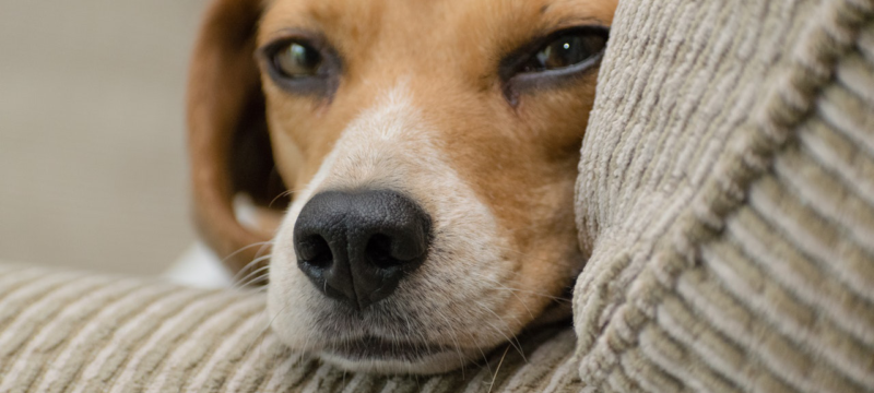 Have you ever considered, who acquires the pets in the divorce?